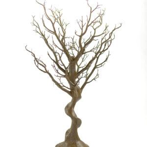Chocolate Manzanita Tree