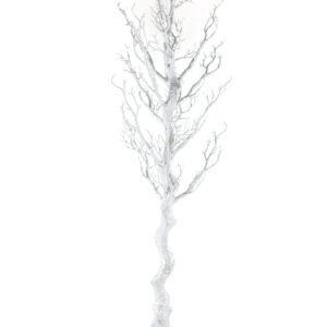 Silver Sparkle Manzanita Tree