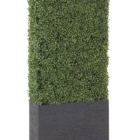 Boxwood Rental